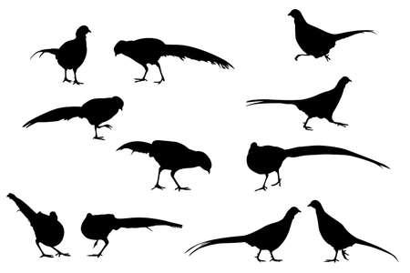 nye: pheasant vector silhouettes, design elements