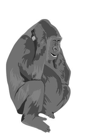 gorilla talking on cell phone Stock Vector - 4344915