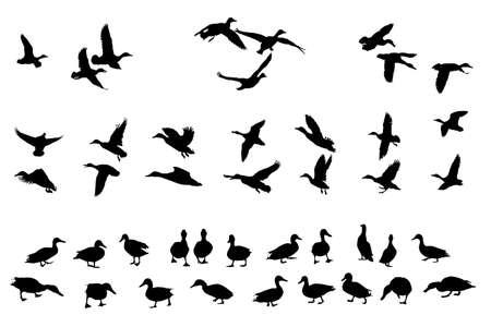 colección de siluetas de patos cruzados para los diseñadores Ilustración de vector