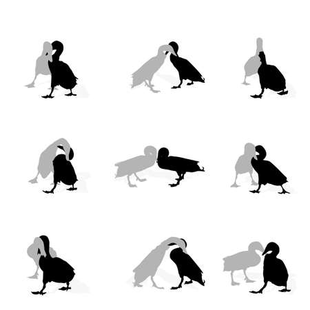 drakes fighting, collection for designers  Vector