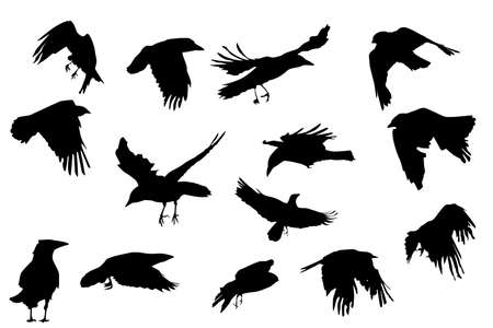 crows  flying, vector silhouette collection  Vector
