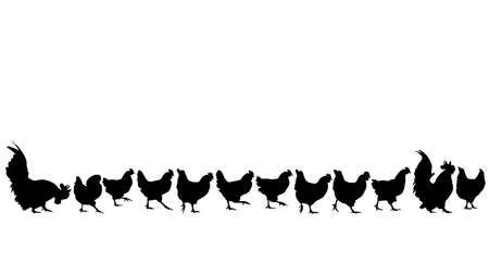 natural cock: chicken walking silhouettes, collection for designers