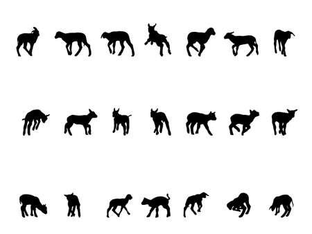 lamb silhouettes,  collection for designers Vector