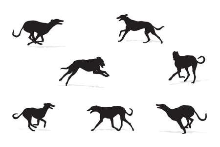 temperamento: windhound funcionamiento siluetas colecci�n para dise�adores