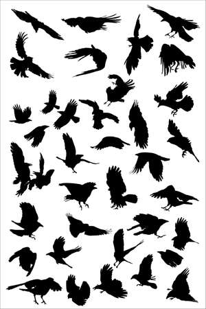 corvus: crows  flying, vector silhouette collection