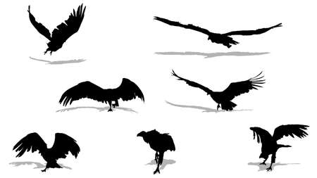 carrion: vulture taking off vector silhouettes Illustration