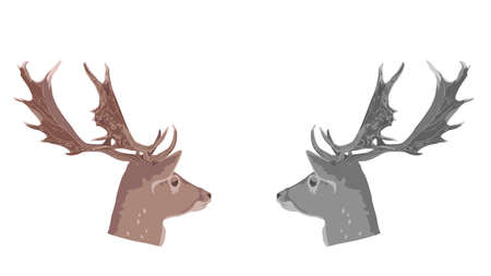 red deer: buck deer head, vector Illustration