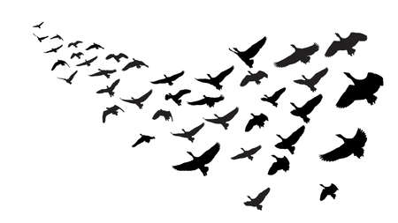 pajaro dibujo: gansos salvajes en vuelo