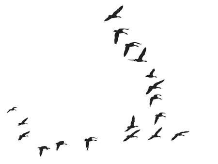 zwerm vogels: kluwen van ganzen Stock Illustratie