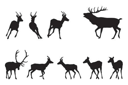 red deer running Vector
