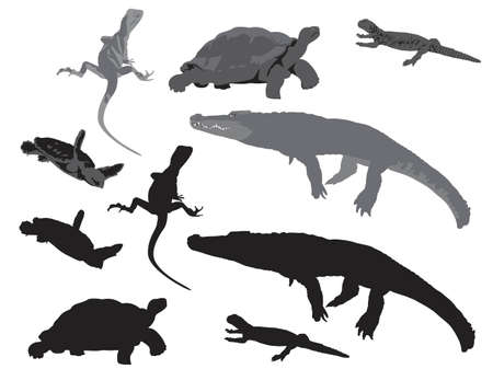 coldblooded: reptiles and amphibians vector illustration Illustration
