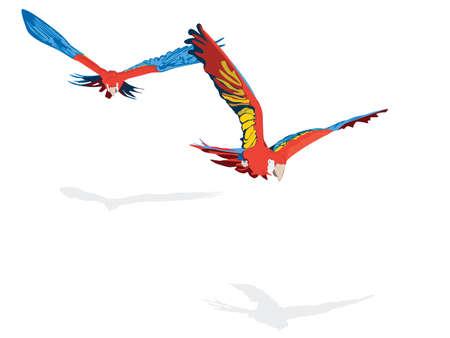 scarlet Ara pair flying Vector