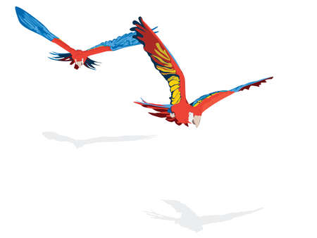 the two parrots: scarlet Ara pair flying