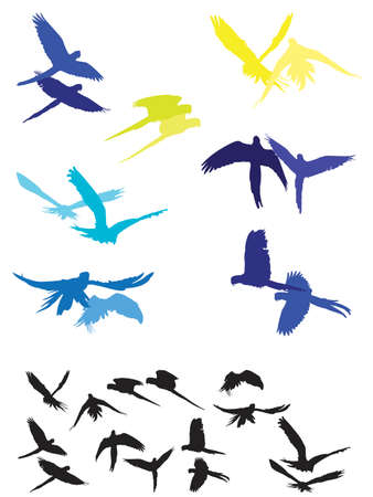 aloft: ara pair flying parallel and synchronized to each other silhouettes Illustration