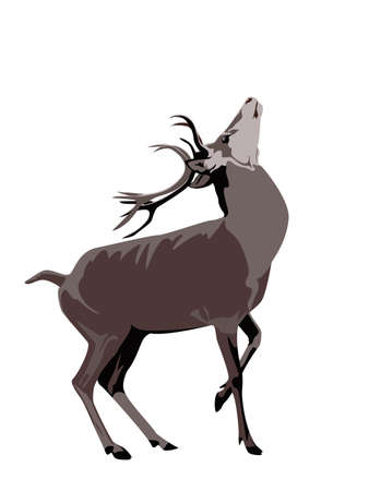 red deer: color illustration of buck deer
