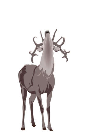 grunt: buck deer grunting Illustration