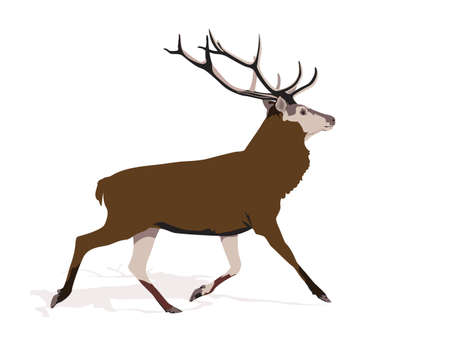 red deer: illustration of buck deer running Illustration