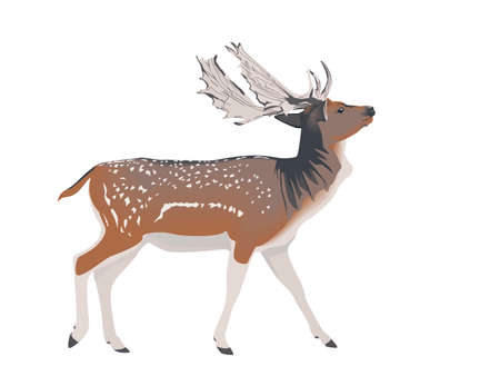 cervidae: white-tailed deer stag