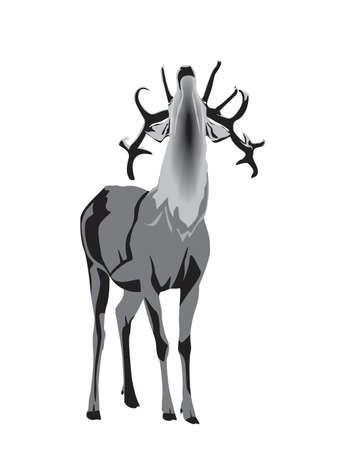 grunt: grayscale illustration of buck deer grunting