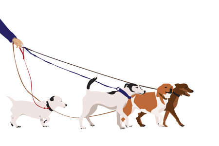dog walking: professional dog walking