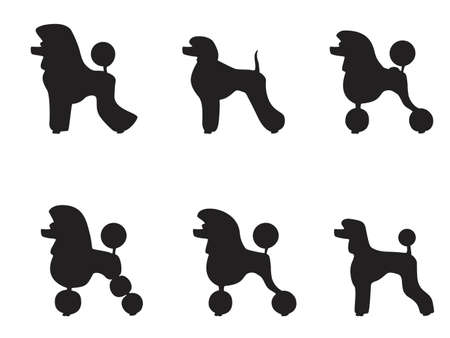 black poodle clipped in various styles Vector