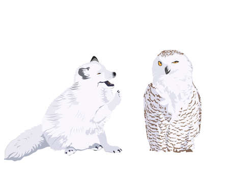 tundra: arctic fox kit and snowy owl Illustration
