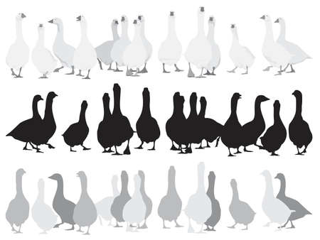 marching  geese, three color versions Vector