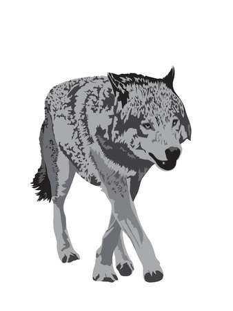gray wolf Stock Vector - 6262414