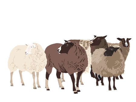 flock of sheep Stock Vector - 6304066