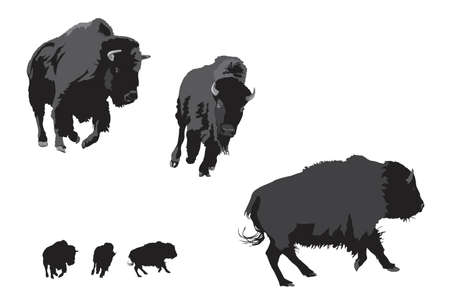 nomadic: illustration of American bison galloping
