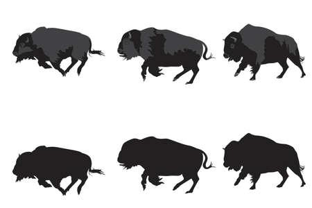 afbeelding van Amerikaanse bison tasten