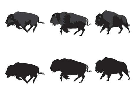 illustration of American bison galloping