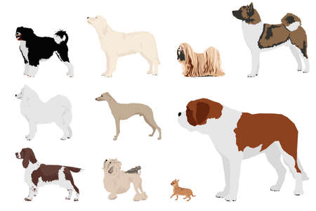 set of ten dog breeds Vector