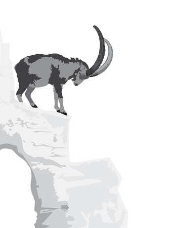 steep: Alpine Ibex - Capra ibex ibex