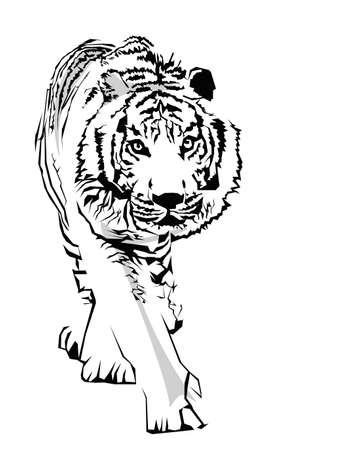 panthera: illustrazione di tigre Vettoriali