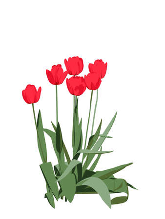 tulips: group of bright red tulips Illustration