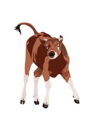 gait: happy cow
