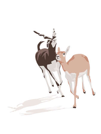 galop: pair of antelopes in gallop