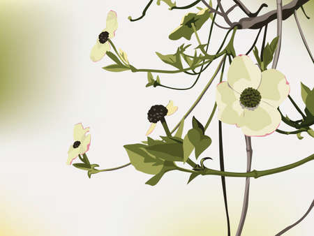 Flowering Dogwood backdrop with Copy-Space
