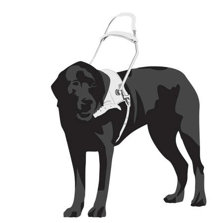 seeing-eye dog  Vector