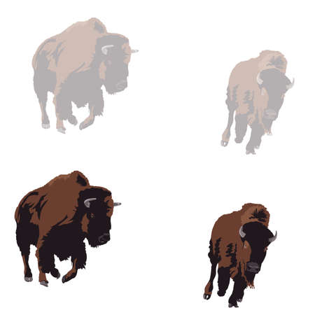extinction: American bison galloping, two color versions Illustration