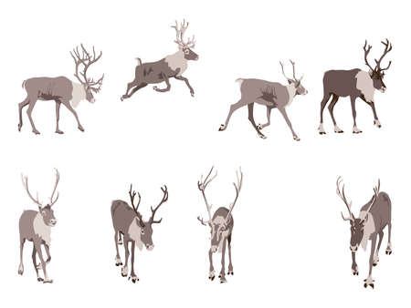 set of eight reindeer colored illustration Stock Vector - 8328701