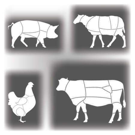 schneiden: Meat Diagramme Illustration