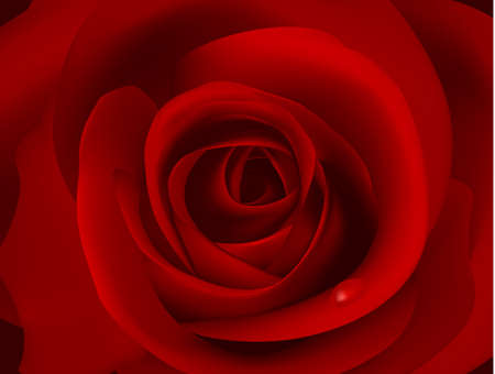 Macro image of dark red rose with water droplet Vector