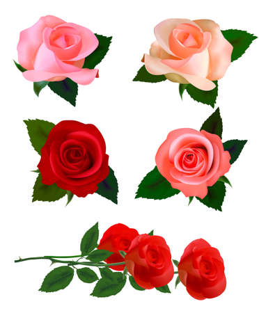 Set with a beautiful roses. Photo-realistic  Vector