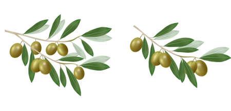 Zielona gałązka oliwek. Fotorealistycznych. Ilustracje wektorowe