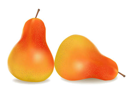 Two ripe yellow pears. Vector