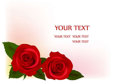 Beautiful red roses, illustration Vector