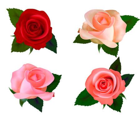 tea rose: Set with a beautiful roses. Photo-realistic