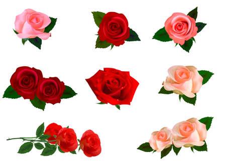 Big set of beautiful roses. Photo-realistic Vector